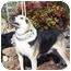 Photo 2 - Hound (Unknown Type) Mix Dog for adoption in Oakland, Arkansas - Hansom