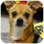 Photo 2 - Chihuahua Mix Dog for adoption in Sacramento, California - Walker 6 pounds, needs foster