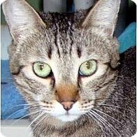 Adopt A Pet :: Adam - Canoga Park, CA
