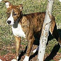 Adopt A Pet :: Leon - Ridgely, MD