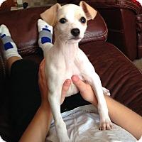 Adopt A Pet :: William - Indian Trail, NC