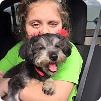Adopt A Pet :: Mitzi - Hazard, KY