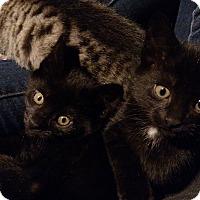 Adopt A Pet :: Pistachio and Petunia - Bear, DE
