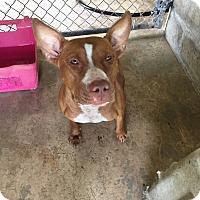 Adopt A Pet :: Monkey - Pinellas Park, FL