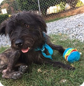 Terrier (Unknown Type, Medium) Mix Dog for adoption in Greensboro, North Carolina - Wholly