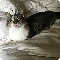 Adopt A Pet :: Lucy (COURTESY POST) - Baltimore, MD