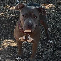 Adopt A Pet :: Arie - San Diego, CA