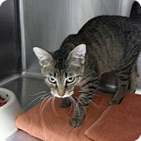 Adopt A Pet :: Momma - Fort Scott, KS