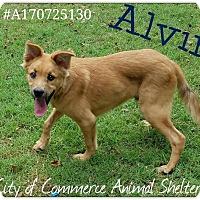 Adopt A Pet :: Alvin - Commerce, TX