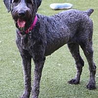 Adopt A Pet :: Paige - Bedminster, NJ