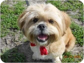 Lhasa Apso Dog for adoption in Lockhart, Texas - Jasmine