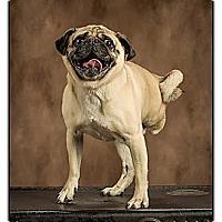 Adopt A Pet :: Radar - Owensboro, KY