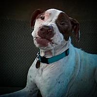 Adopt A Pet :: Hank - Ardmore, OK