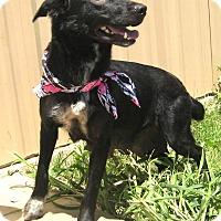 Adopt A Pet :: LILLY - Pilot Point, TX
