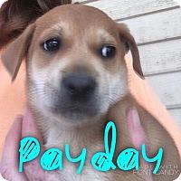 Adopt A Pet :: Payday - Garden City, MI