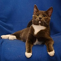 Adopt A Pet :: Osborne*F* - Sanford, FL