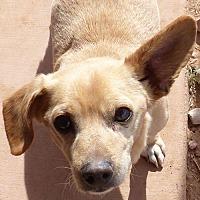 Adopt A Pet :: Aryes - Phoenix, AZ