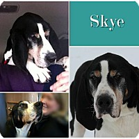 Adopt A Pet :: Skye ADOPTED - Ontario, ON