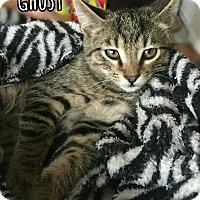 Adopt A Pet :: Ghost - Bonsall, CA