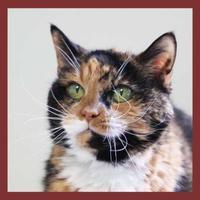 Adopt A Pet :: Catty Shack - Batavia, OH