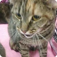 Adopt A Pet :: Taffy - Columbus, OH