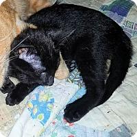 Adopt A Pet :: Buzz - Petersburg, VA