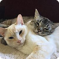 Adopt A Pet :: Stella and Nikko - Novato, CA