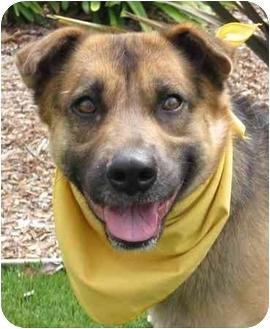 German Shepherd Dog Dog for adoption in San Diego, California - Maya