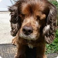 Adopt A Pet :: Hannah - Madison, WI