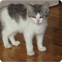 Adopt A Pet :: kitten - Etobicoke, ON