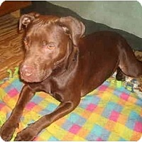 Adopt A Pet :: Mac - North Jackson, OH
