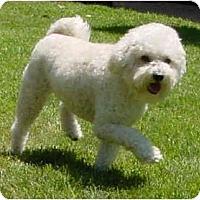 Adopt A Pet :: Gracie - La Costa, CA