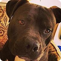 Adopt A Pet :: Benji - Toms River, NJ