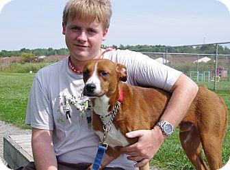 Boxer/Shepherd (Unknown Type) Mix Puppy for adoption in Elyria, Ohio - JR