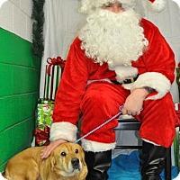 Adopt A Pet :: Shirley - Erwin, TN