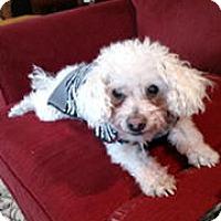 Adopt A Pet :: Eddie - Bellingham, WA