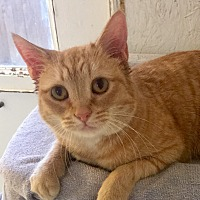 Adopt A Pet :: Prissy - Mount Pleasant, SC
