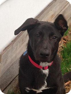 German Shepherd Dog Mix Dog for adoption in Portland, Maine - Brooke