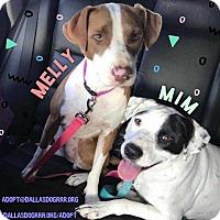 Adopt A Pet :: Melly - Allen, TX