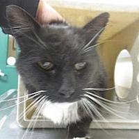 Adopt A Pet :: Grizwald - Reno, NV
