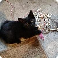 Adopt A Pet :: Lira - Trenton, NJ