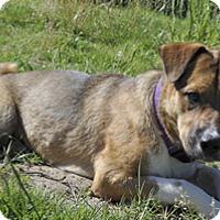 Adopt A Pet :: Timber - Woodburn, OR