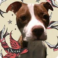 Adopt A Pet :: Deevi - Des Moines, IA