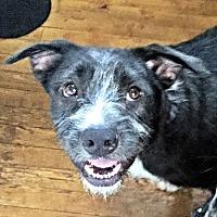 Adopt A Pet :: Roger - Petersburg, VA