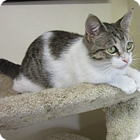 Adopt A Pet :: Molly - Glenwood, MN