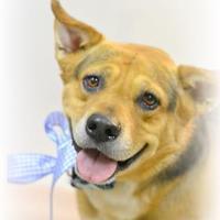 Adopt A Pet :: Tony - Lake Havasu City, AZ