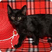 Adopt A Pet :: Geraldine - Marietta, OH