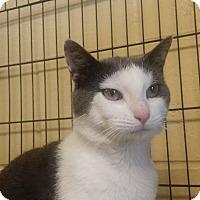 Adopt A Pet :: Eli - Berlin, CT