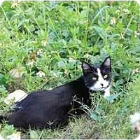 Adopt A Pet :: Annabell - Naples, FL