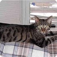 Adopt A Pet :: Piper - Warren, MI